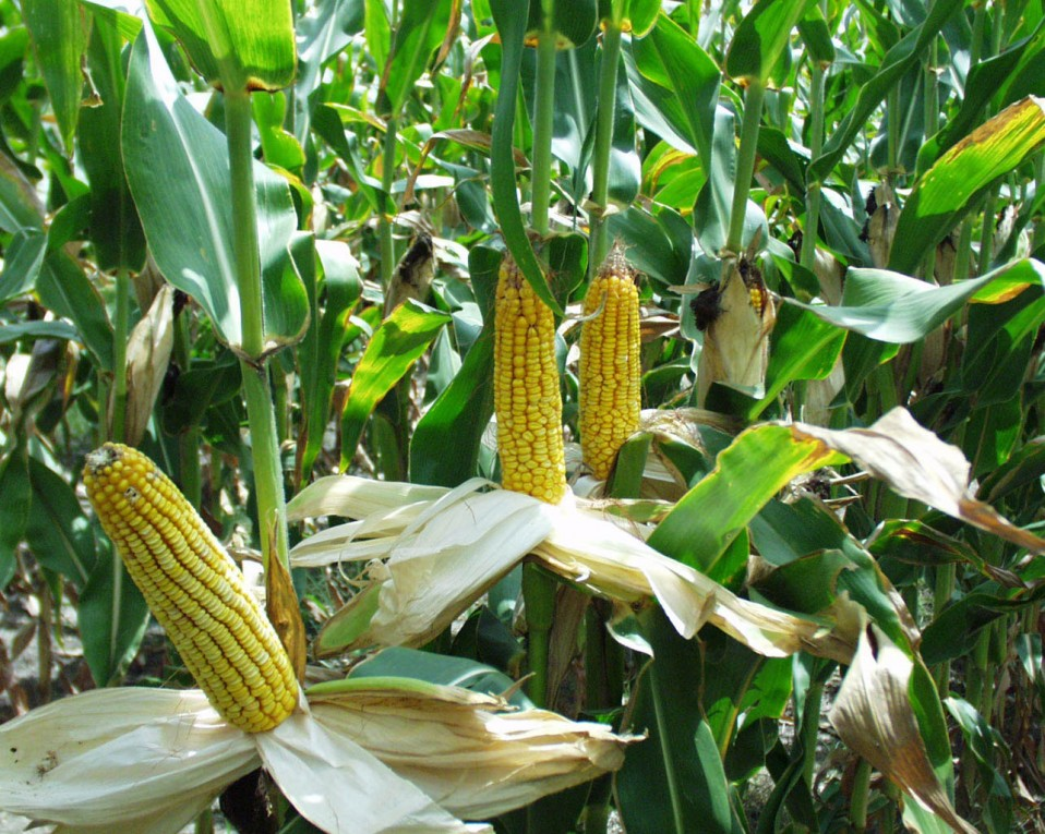 Sending farmers to Northern Uganda