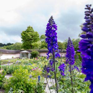 Knighton Manor Garden Open 2019