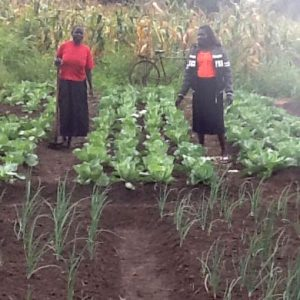 Farmers are trained plant variety and use crop rotation