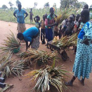 Members receiving Pineapple suckers