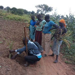 Agricultural Officer demonstrating the planting of Pineapple suckers