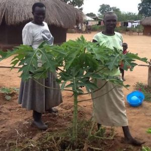 Imvepi refugee camp with one of her new papaya trees