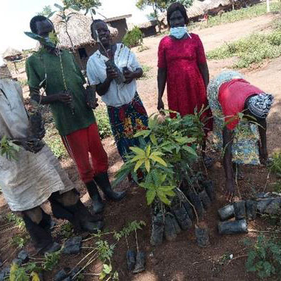 tree-seedling-distribution