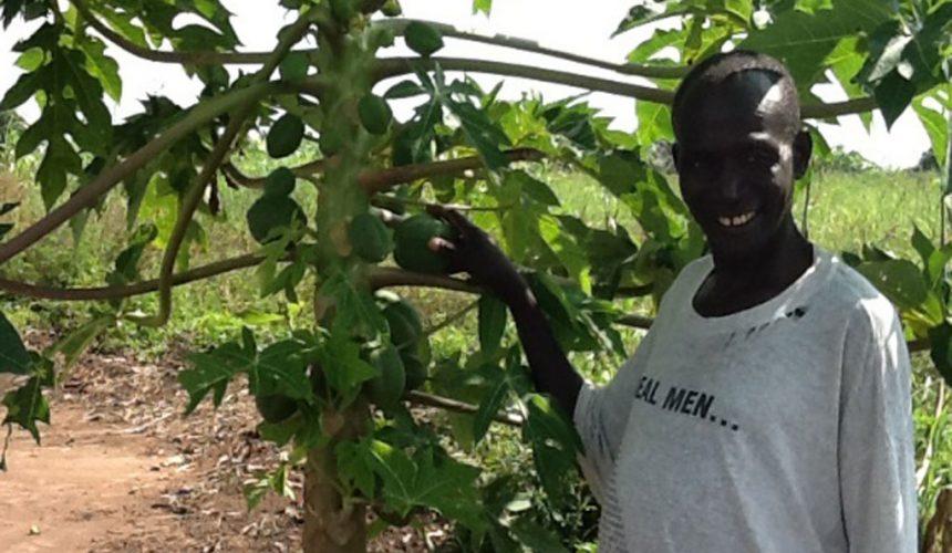 Papayas are growing in Matu