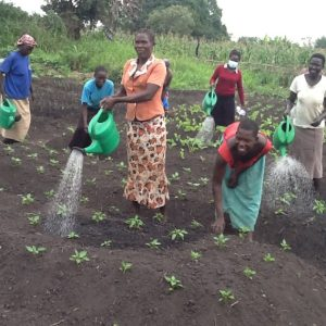 Long term benefits of an agriculture scheme with refugees