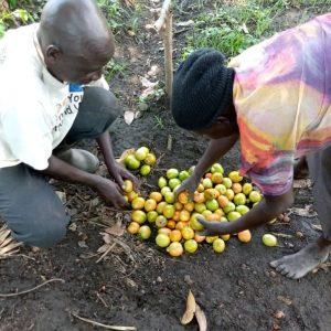 Harvest time…